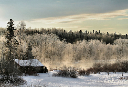 trees winter camp mist canada cold water river frost shed steam explore newbrunswick blueribbonwinner mywinners rileybrook flickrdiamond theperfectphotographer tobiqueriver chickadeed