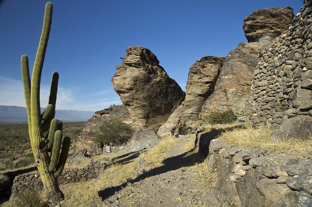quilmes rovine cactus