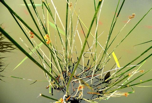 Feuiles exotiques plantes exotiques jardins des plantes for Plante exotique