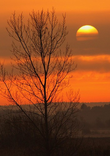 uk sun tree nature sunrise fen lakenheath naturewatcher