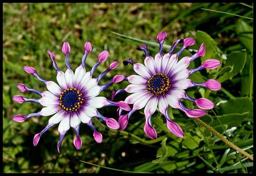 Two unusual Flowers-2&