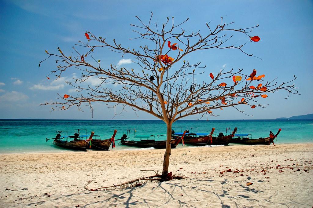 Бамбу таиланд