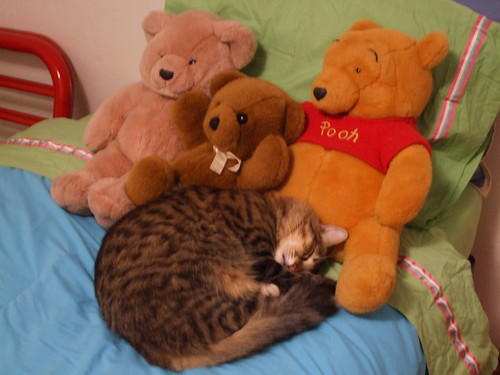 stuff animals