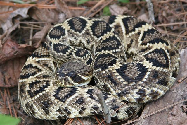 Las 10 Serpientes más peligrosas de América