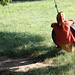 Small photo of Tire Swing