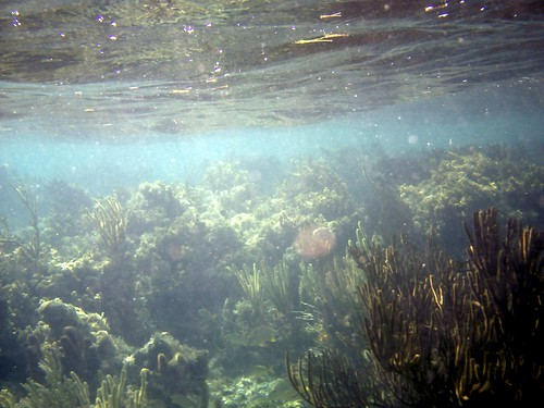 coral belize reef glovers