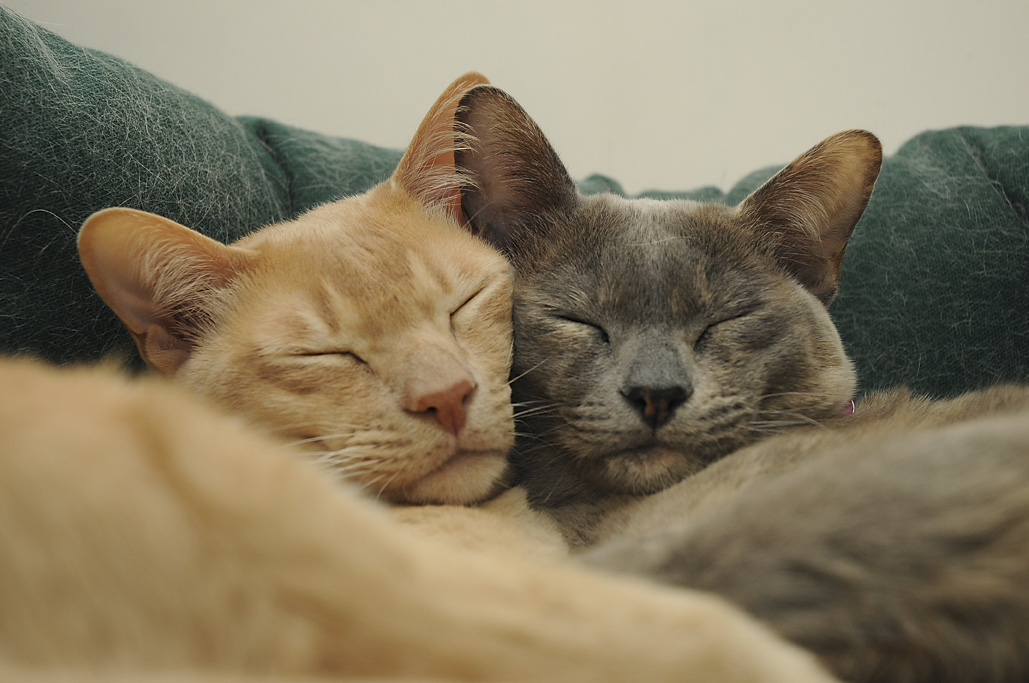 Image Result For Two Cats Together