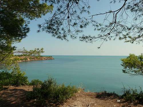 trees sea beach spain costadaurada marlis1