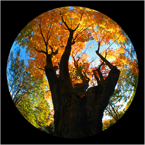 blue orange black tree yellow circle square massachusetts foliage northshore salem hydra pictureperfect sugarmaple lightninhopkins greenlawncemetery flickrsbest canona630 anawesomeshot colorphotoaward goldstaraward treesdiestandingup flickrlovers naturescreations dragondaggerphoto precisiondesign superaffisheyelens025x lovethisfisheye