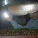 Small photo of Fish