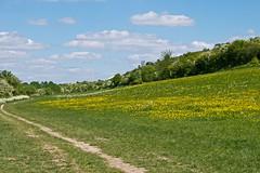 Bedfordshire Phots