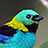 the Neotropical Birds group icon