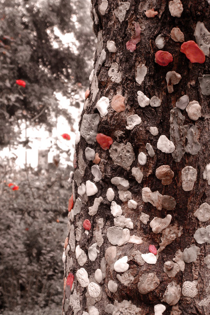 Arbol De Chicle http://www.flickr.com/photos/laapmx/2509835447/