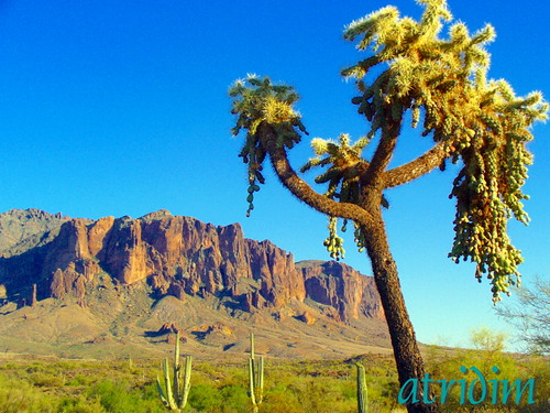 arizona cactus mountains cacti photo flickr desert cholla apachetrail saguarocactus superstitionwilderness superstitionmountain tontonationalforest virtualjourney atridim