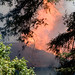 2008-09-05 Structure & Wildland Fire — Ben Lomond, CA