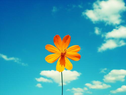 Una flor sencilla y bonita