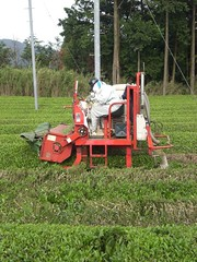 agriculture, field, plough, agricultural machinery, lawn, land vehicle, harvester,