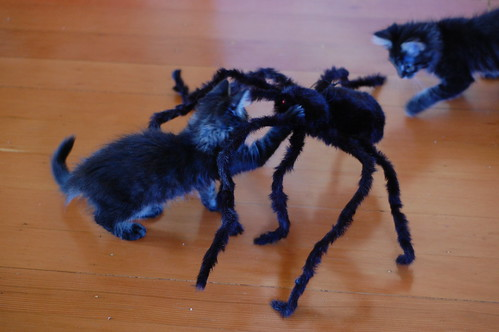 Albert, Davy and the Spider