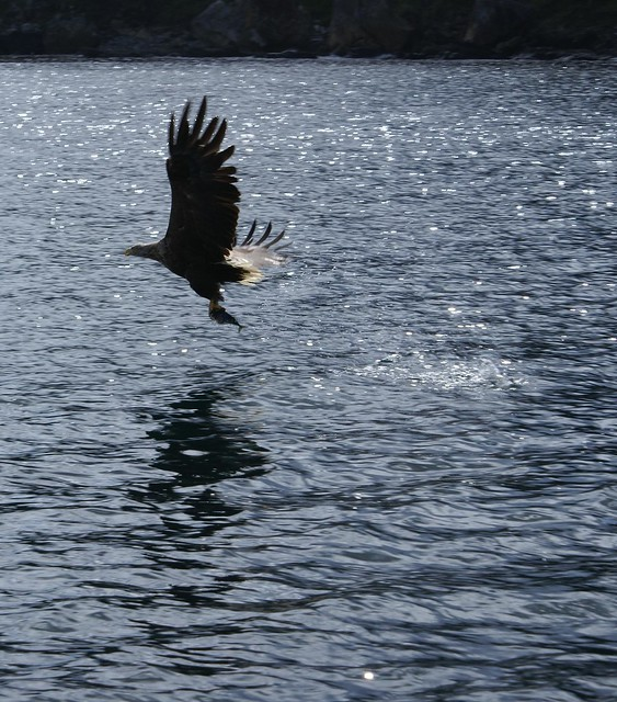 Freedom !!