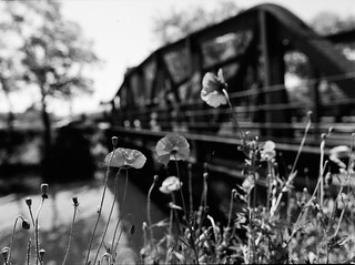 poppy & bridge