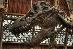 tyrannosaurus, dinosaur,