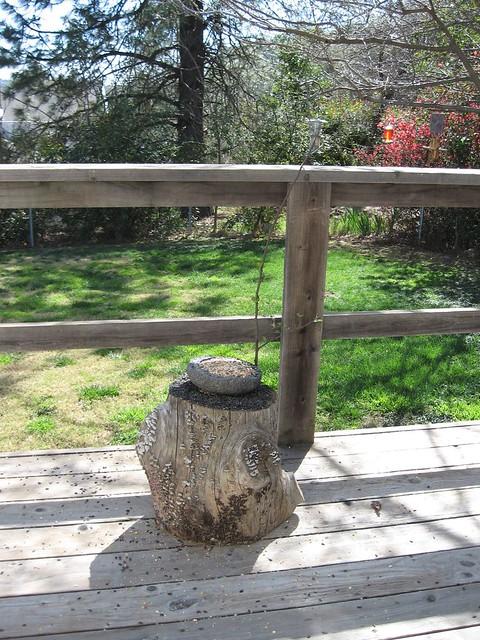 Deck bird feeder flickr photo sharing