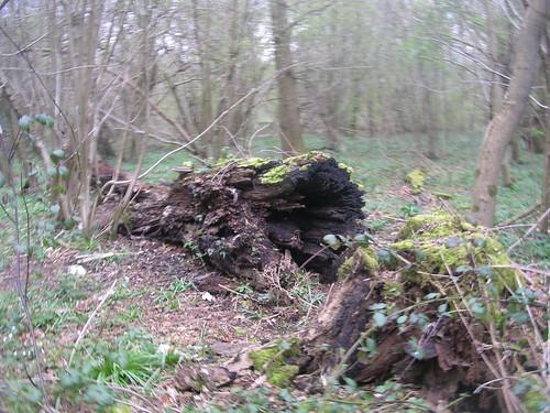 Rotten log