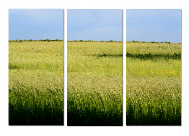 Prairie from Flickr via Wylio