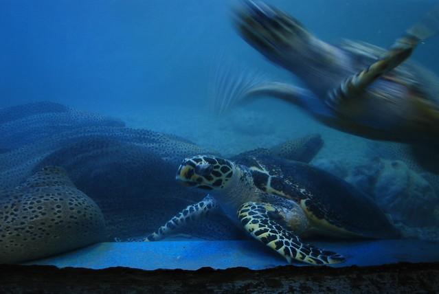 Tortugas marinas en el acuario tri nguyen de nha trang for Acuario tortugas