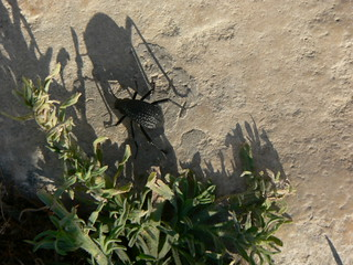 Jerash, Jordan - Beetle