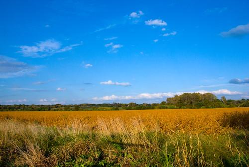 usa lawrence wheat ks
