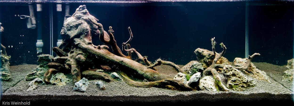 50g New Tank Hardscape Guitarfish
