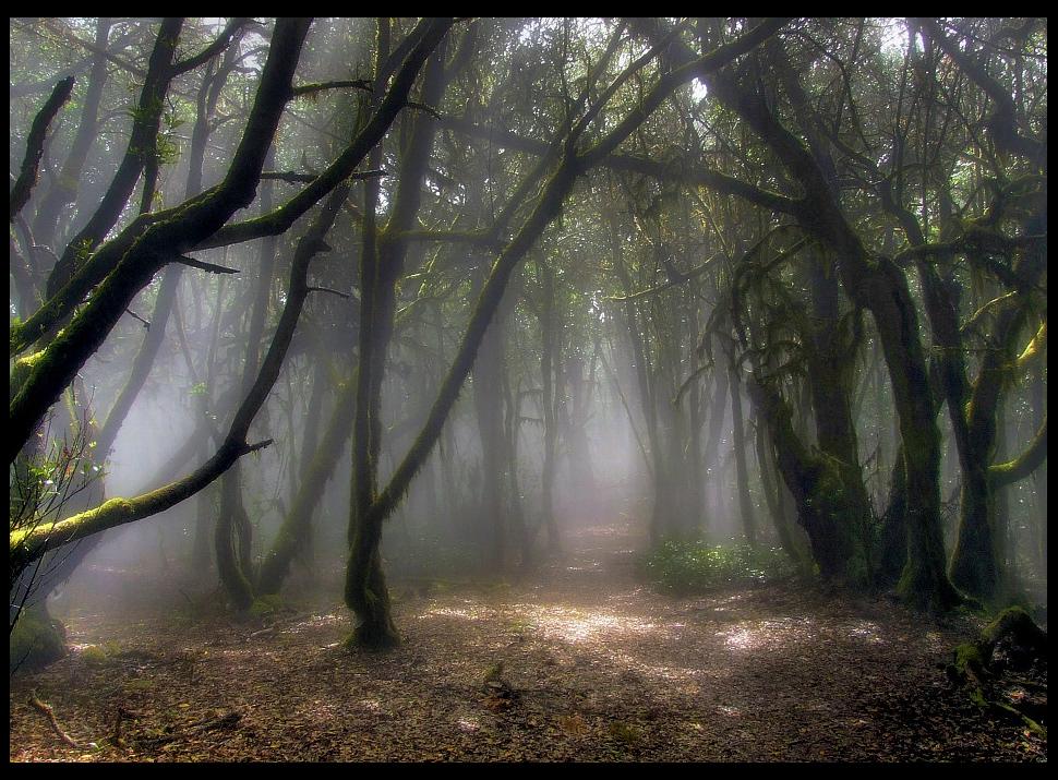 Bosque Canario