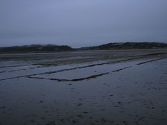 Shellfish Lanes
