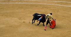 performing arts(0.0), animal sports(1.0), cattle-like mammal(1.0), bull(1.0), tradition(1.0), sports(1.0), bullring(1.0), entertainment(1.0), matador(1.0), performance(1.0), bullfighting(1.0),