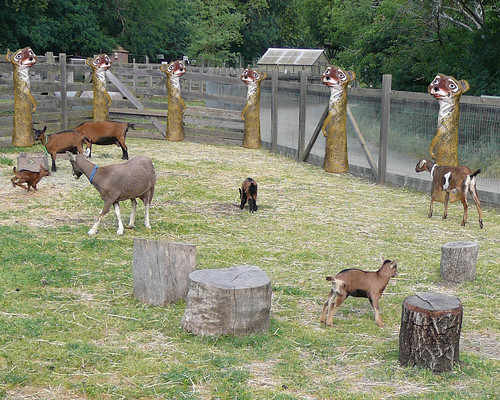 Raising Boer Goats – 4 Important Considerations For Goat ... Raising Goats