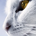 The whitest cat I know by Villi.Ingi