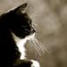 Small photo of Kissan viikset - ne ovat aika isot!