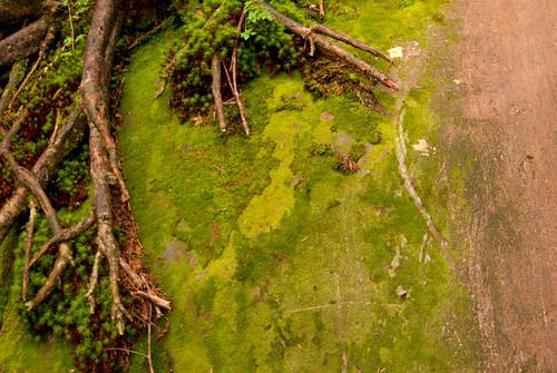 japan forest miniature moss view nagano jpn tateshina naganoken yugawa ashidahakkanosonota