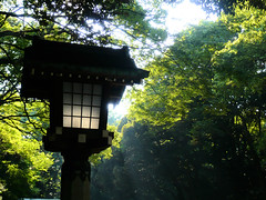 Lantern - Yoyogi Koen