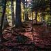 A Natural Path