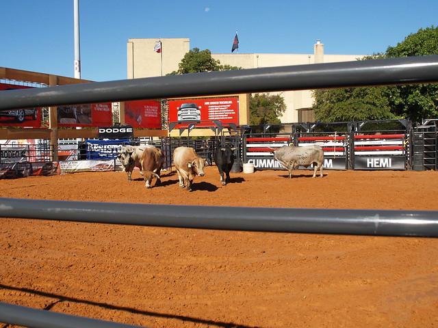 Flickriver Photoset Dallas Texas Dodge Rodeo Live Bull