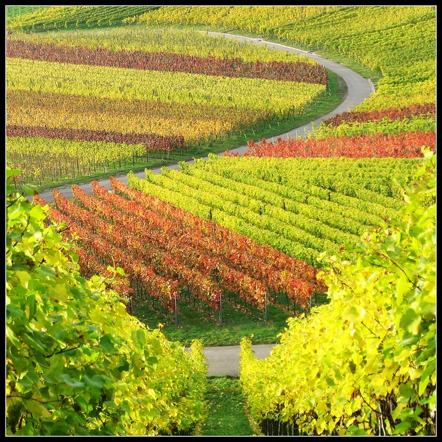Take a Break from everyday Life in Nature ... Vineyard Fall Colors - Landscape in Germany