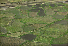 outdoor structure(0.0), soil(0.0), maze(0.0), paddy field(0.0), terrace(0.0), flooring(0.0), agriculture(1.0), field(1.0), plain(1.0), green(1.0), crop(1.0), landscape(1.0), lawn(1.0), plantation(1.0),