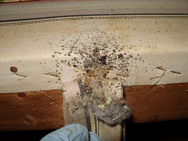 Bed Bugs Hotel Prevent Bringing Home