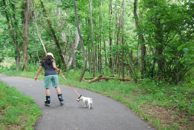 Dogs love Virginia State Parks!