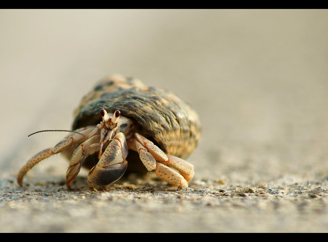 """One more shot from the hermit crab """"photo shoot"""" :-)"""
