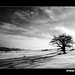 by © Ali Shokri / www.alishokri.com