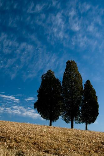 blue trees clouds canon landscape golden three triptych brothers civilwar manassas battlefield manassasnationalbattlefieldpark eos30d battleofbullrun firstmanassas secondmanassas tklancer
