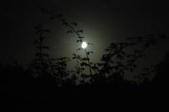 Lune et feuillages